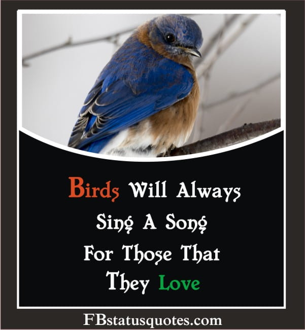 Birds Will Always Sing A Song For Those That They Love