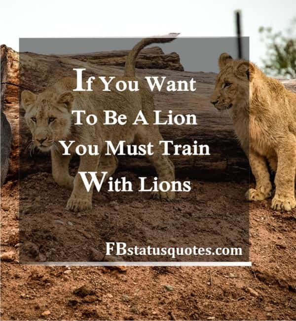 If You Want To Be A Lion, You Must Train With Lions.