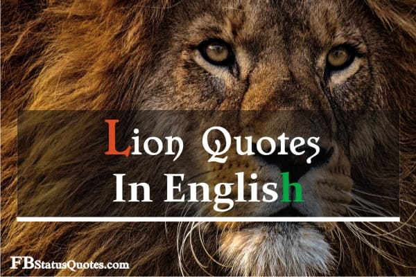 Lion Quotes In English