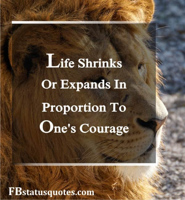 Lion Quotes Inspirational